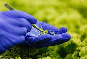 300x205 Green Technology