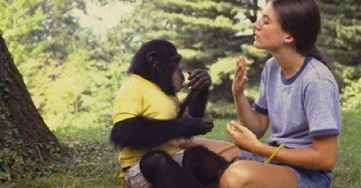 Washoe Chimp, first non-human sign language practitioner